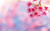 Beautiful pink flower blossom(@Freepick)