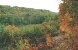 La forêt d'Argonne en automne