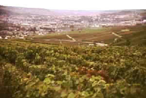 Vignes à Champillon